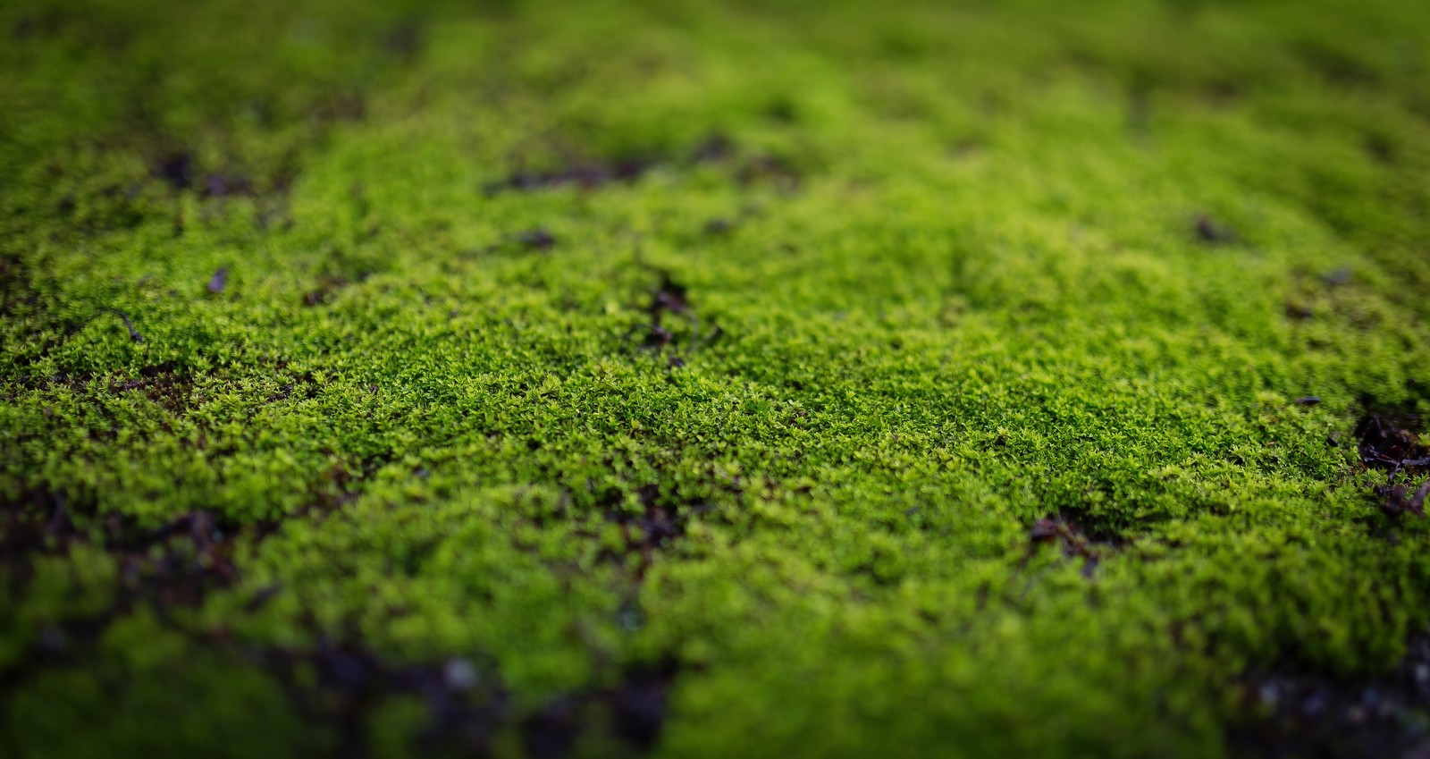 梅雨が迫ってくる!実際のところ珪藻土マットってどうなの?